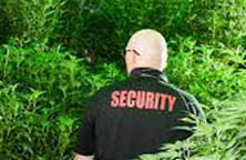 California PPO marijuana security